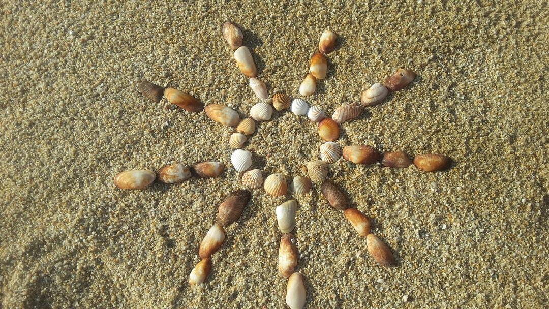 Sea shells in Plaka beach, Naxos island, Cyclades, Greece.